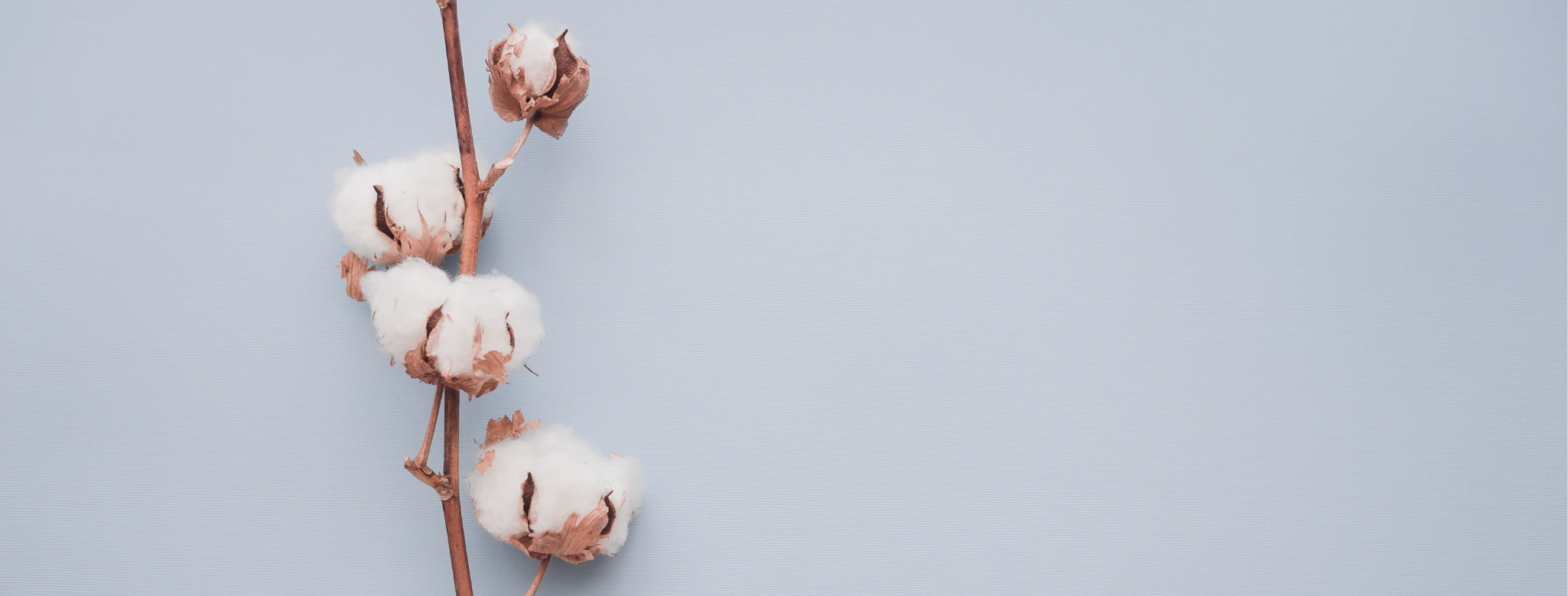 Difference Between Organic and Sustainable Cotton