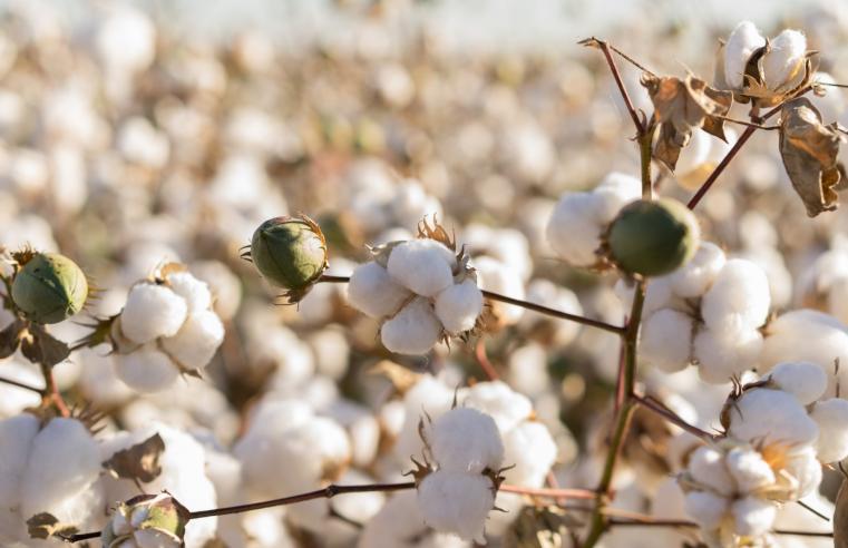 Bevorzugte Baumwolle – Was ist das und warum ist sie besser?